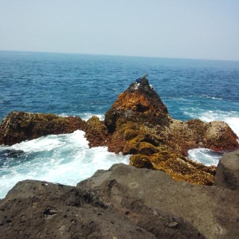 鵜渡根島の磯~マルタカ