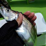 2019年7月の東京湾タチウオジギング @渡辺釣船店