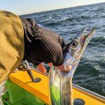 2020年10月の東京湾タチウオジギングは大撃沈 @渡辺釣船店